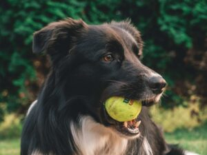 cheapest tennis ball