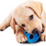 Tennis Ball alternative for Dogs