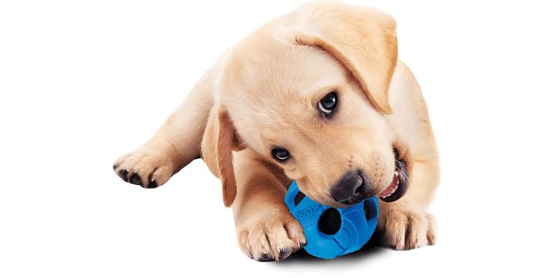 Tennis Ball alternative for Dogs