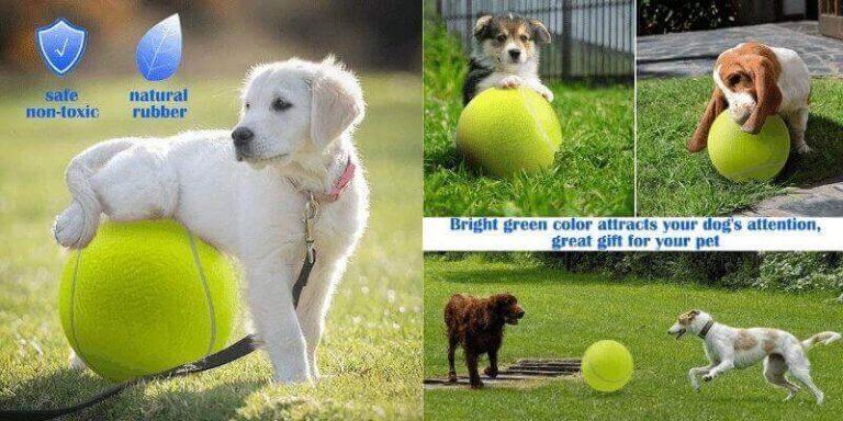 best tennis balls for dogs