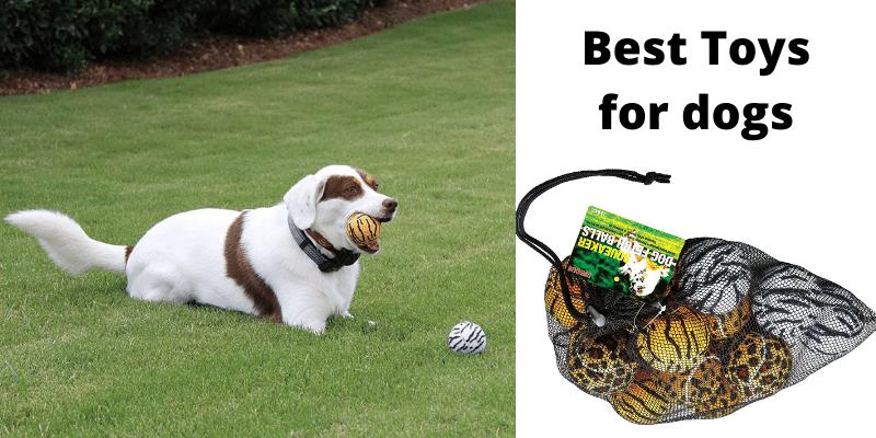 Unique Dog Fetch Squeaker Balls