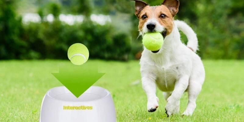 Petsafe Automatic Ball Launcher Dog Toys